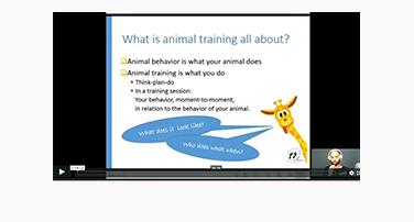 Animal Training Flow-charts with Eva Bertilsson