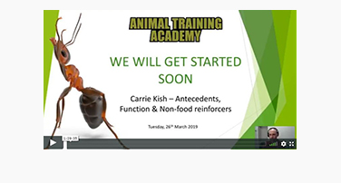 Antecedents, Function and Non-Food Reinforcers with Carrie Kish