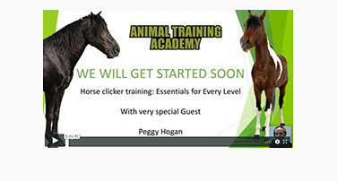 Horse Clicker Training – Peggy Hogan