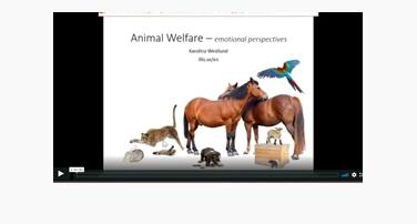 Animal Emotions with Dr. Karolina Westlund