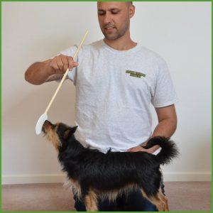 Ryan Cartlidge Animal Training Academy Dog